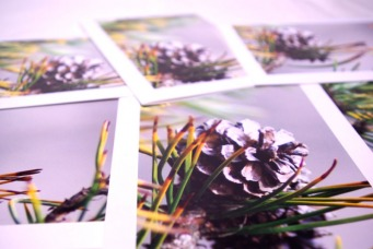 Shore Pine Blank Greeting Cards